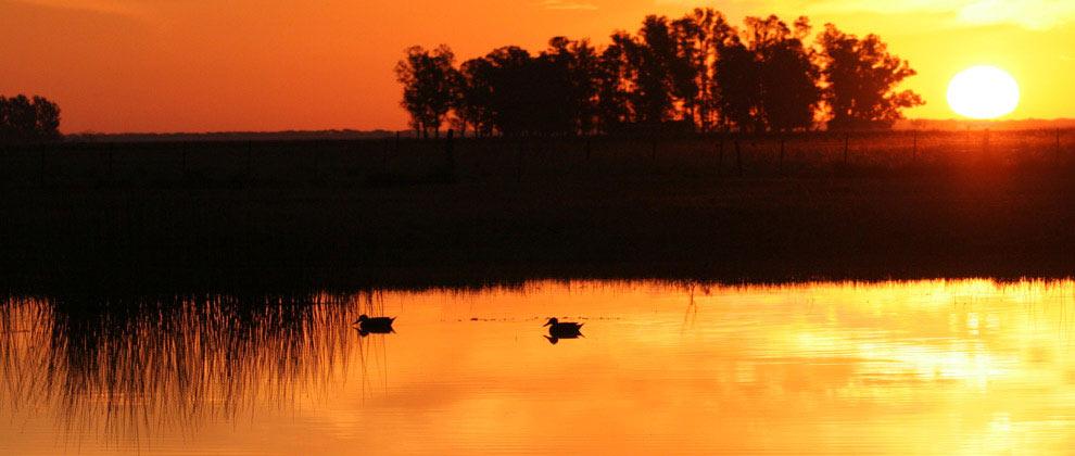 2wsa-ducks-on-a-pond