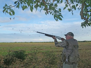 Argentina high volume dove hunting booking